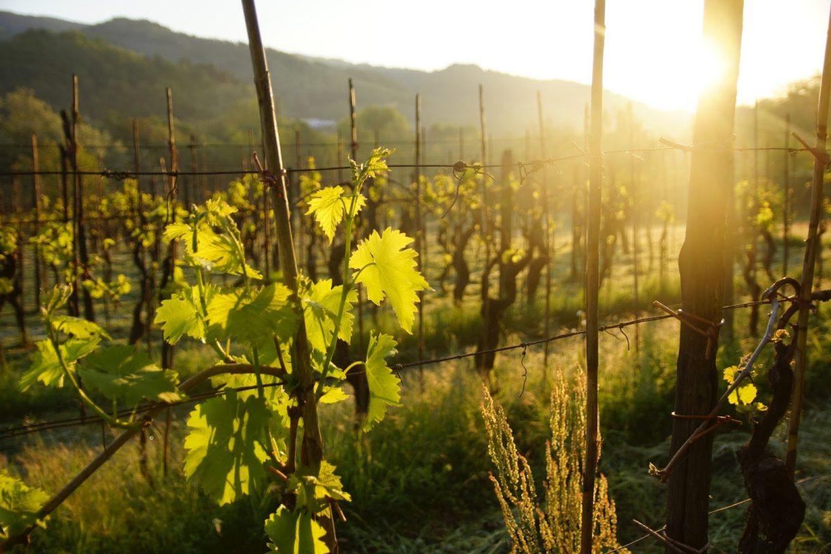 Tuscany Day 4: Morning Walk